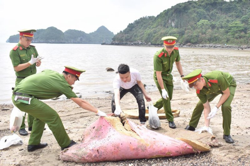 Garbage collection has been responded by local people in Cat Ba town